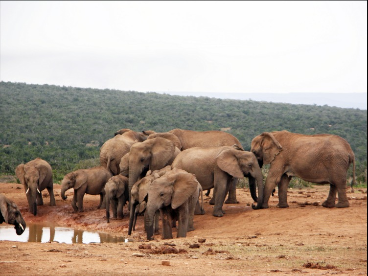 Picture of Addo