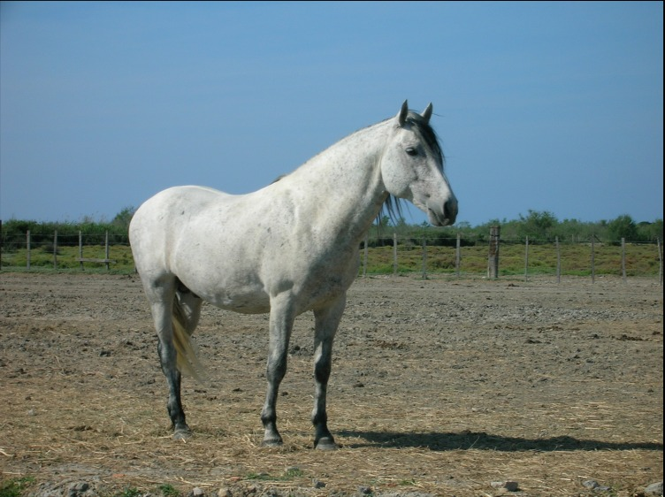 Picture of Camargue