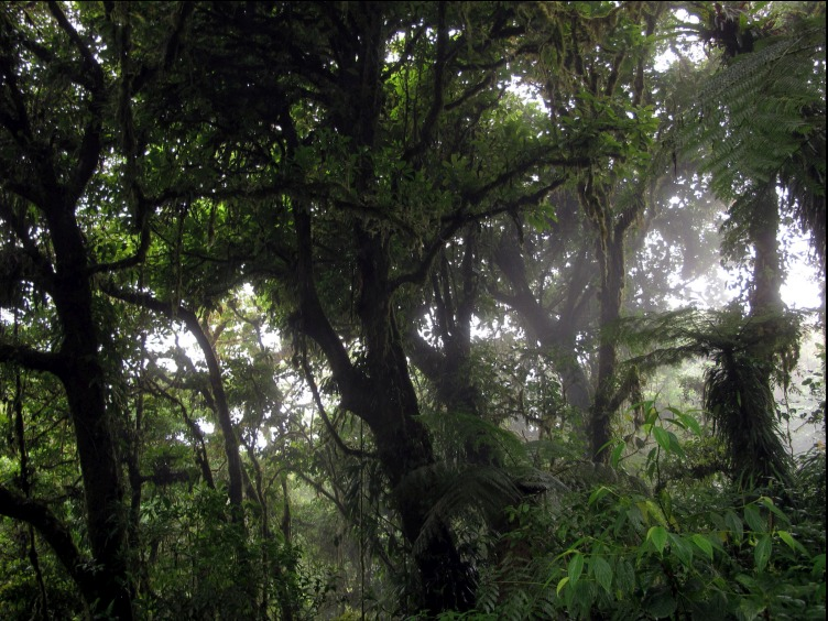 Picture of Monteverde